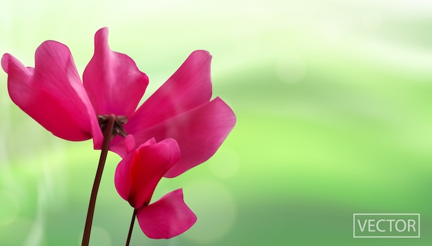 Closeup of flowers isolated on bokeh green