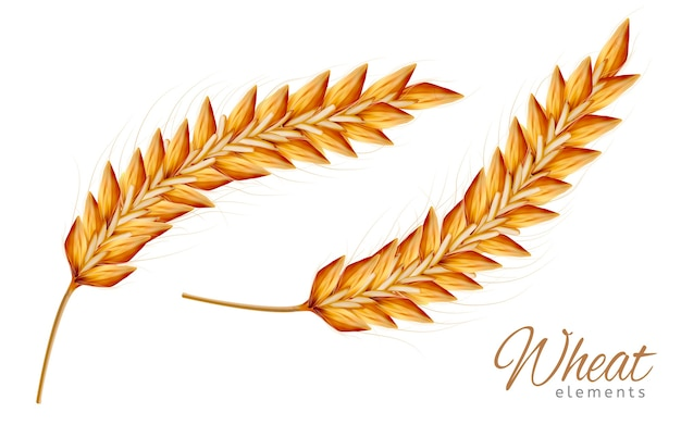 Closeup look at wheat elements isolated illustration