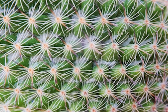 Closeup of cactus plant wallpaper