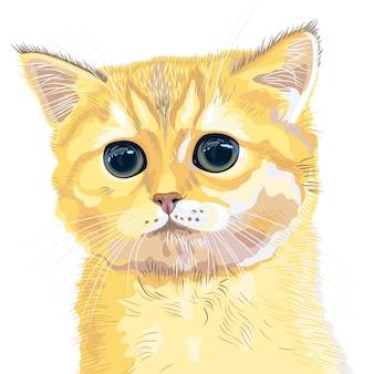 거대한 거대한 눈을 가진 귀여운 솜털 영국 새끼 고양이 사랑스러운 빨간 머리의 근접 촬영 초상화