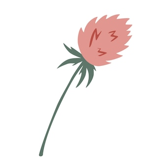 Clover flower herbal branch. summer clover flower. decorative wildflower.  homeopathy products.