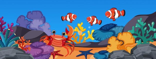 Клоуна и краб под океаном