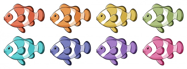 Clownfish in many colors