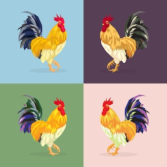 コック、オンドリ。家畜、鳥