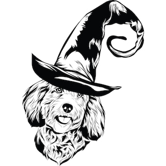 Cockapoo dog in witch hat for halloween