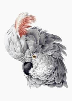 Векторная иллюстрация какаду, ремикс из произведений аерта шумана