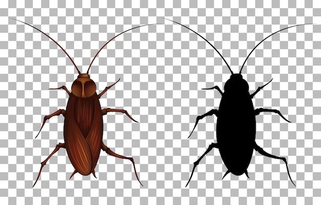 透明な背景にゴキブリ