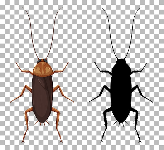 Cockroach with its silhouette isolated on transparent background