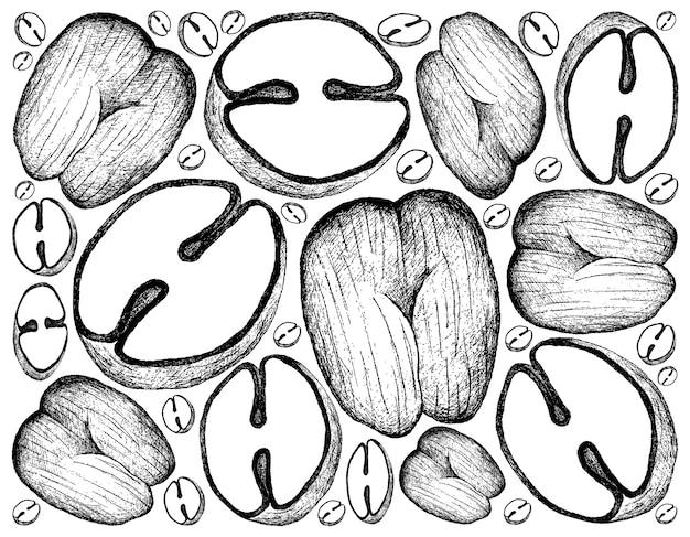Коко де мер или двойной кокосовый орех.