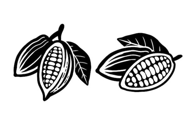 カカオ豆のスケッチ。白のベクトルアイコン。
