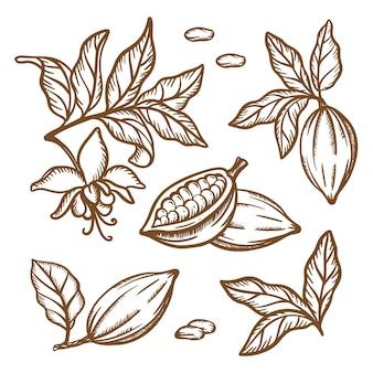 Cocoa 지점 스케치. 과일 씨앗은 테 오브 로마 나무의 가지를 남깁니다. 빈티지 스타일의 갈색 단색 디자인. 손으로 그린 클립 아트 그림 세트