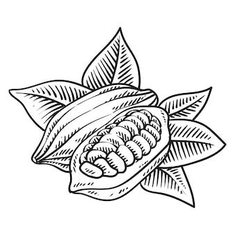 Cocoa fruit bean
