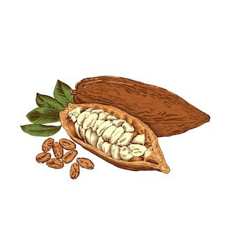 Иллюстрация какао