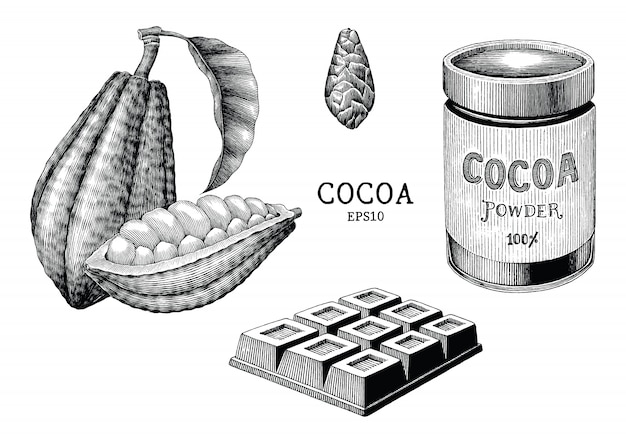 Cocoa plant and product hand draw vintage engraving style isolated on white background