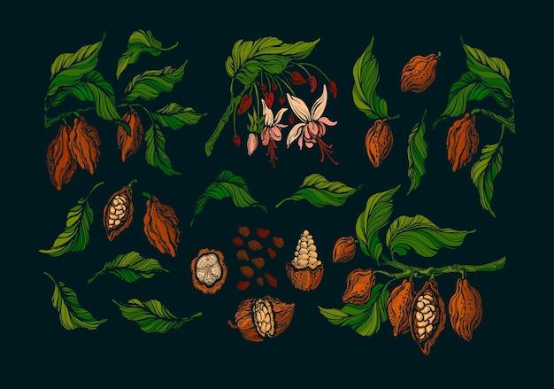 코코아 세트. 녹색 나무 이국적인 과일 콩. 예술 새겨진 빈티지 식물 요소
