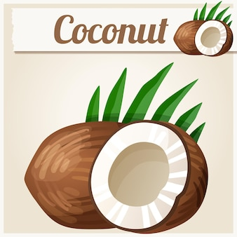 Coconut detailed vector icon