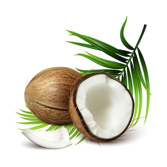 Coconut fresh tropical nut and tree leaves vector