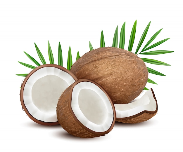 Coconut. fresh tropical opened coco fruit with milk and palm green leaves vector natural dessert