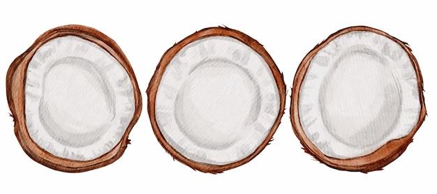 코코넛 고립 된 만화 아이콘을 설정합니다. 벡터 일러스트 레이 션 흰색 바탕에 코 코입니다.