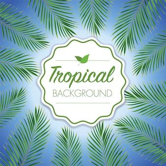 Coconut leaf tropical background