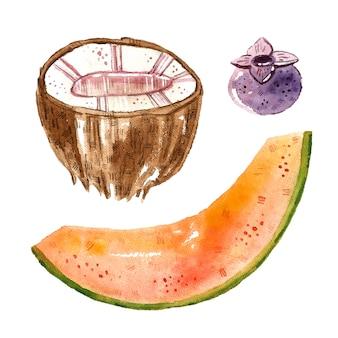 코코넛, 멜론, 블루 베리. 열대 과일 클립 아트, 세트. 수채화 그림. 원시 신선한 건강 식품. 비건 채식. 여름.