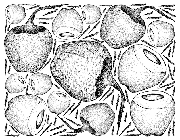 Кокосовое или ocos nucifera фрукты.