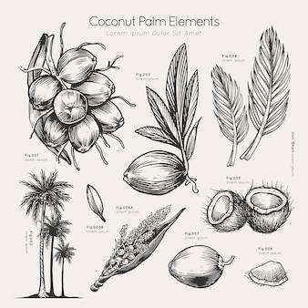 Coconut palm elements hand drawn