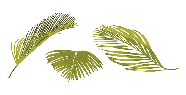 Coconut palm leaves graphic design elements isolated on white background. tropical plant foliage, green palm tree branches for advertising or summer promo, natural flora. cartoon vector illustration