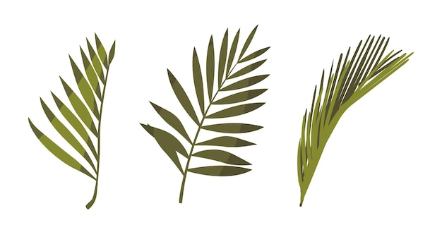 Coconut palm leaves natural floral objects isolated on white background. tropical plant foliage, graphic design elements