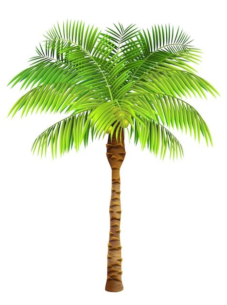 palm tree vectors photos and psd files free download rh freepik com vector palm trees illustrator vector palm tree silhouette
