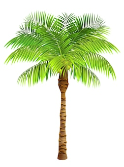 Coconut palm tree. plant, garden, resort. nature concept.
