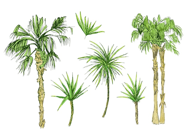 Coconut palms or queen palmae with leaves