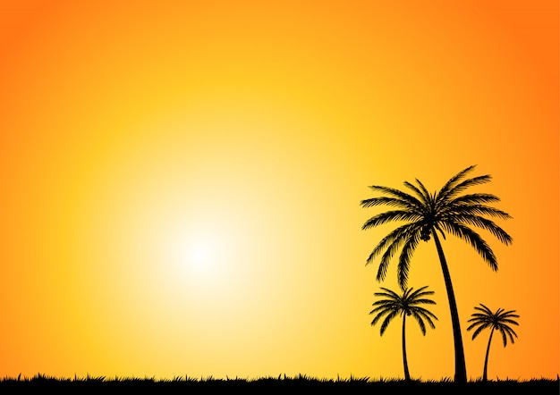 Coconut tree summer background