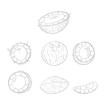 Coconut whole and cut in halves hand drawn outline illustrations set