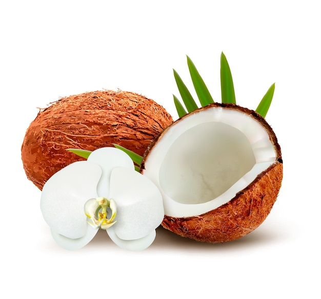 Coconut with leaves and white flower.