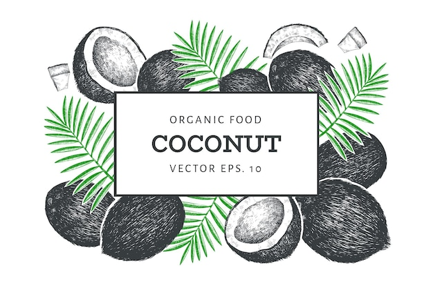 Coconut with palm leaves  template. hand drawn  food illustration. engraved style exotic plant. vintage botanical tropical background.