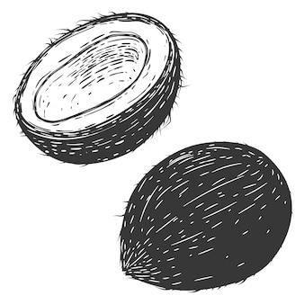 白い背景の上のココナッツのイラスト。ロゴ、ラベル、バッジ、記号の要素。図