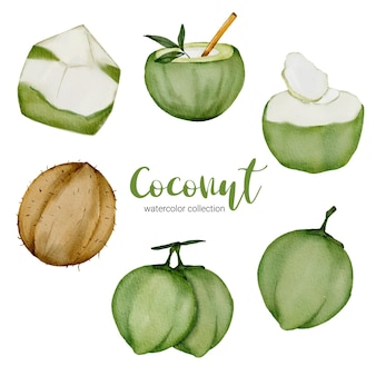 Coconuts set in watercolor style