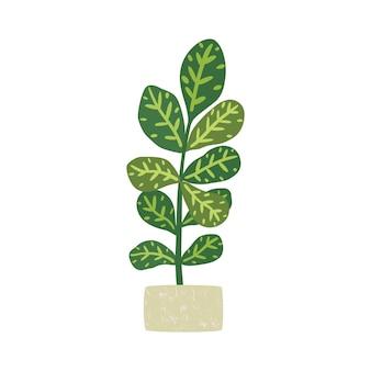 Codiaeumvariegatum。鉢植えの観葉植物。