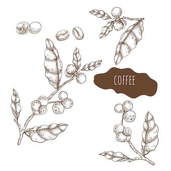 Набор рисованной кофе фрукты