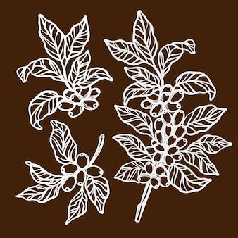 スケッチスタイルのコーヒー葉とベリーのイラストセットとコーヒーの木の枝