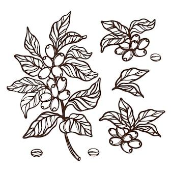 열매와 빈티지 스타일의 커피 나무 단색 디자인의 잎 커피 개요 지점