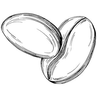 Кофейное дерево и бобы в графическом стиле рука рисовать на белом фоне. изолированный объект с выгравированной иллюстрацией стиля. лучшее для дизайна логотипа, меню, этикетки, значка, штампа.