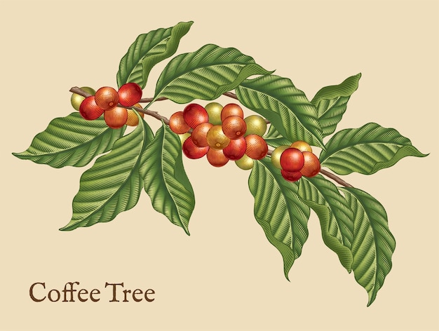 Элементы кофейного дерева, кофейные растения в стиле ретро в стиле травления, затенения цветом