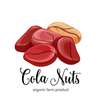 Cola nuts in cartoon style