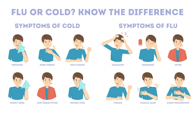 Cold and flu symptoms infographic. fever and cough, sore throat. idea of medical treatment and healthcare. difference between flu and cold.   illustration
