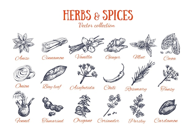 Colection of herbs and spices isolated on white