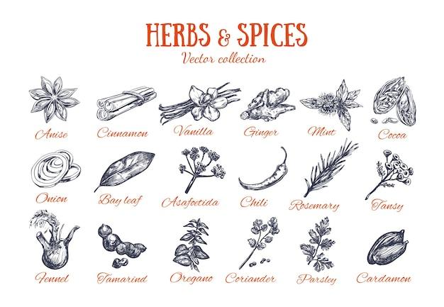白で分離されたハーブとスパイスのコレクション