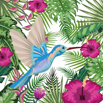 Colibri exotic and tropical bird