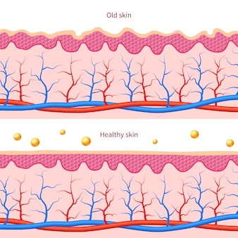 Collagen human skin effect